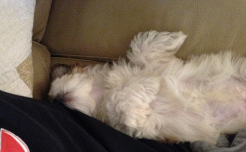 Buddy napping upside down