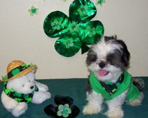 Bailey St Patty's Day Photo Contest Runner Up