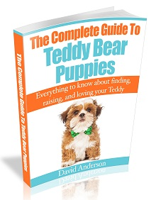The Complete Guide to Teddy Bear Puppies